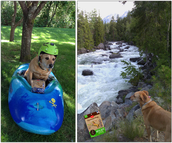 Libby scouts Log Limbo on Icicle Creek, fully aware that healthy hips and joints are crucial for maintaining an aggressively forward kayaking posture.